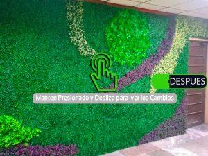 Muro Verde Sports Grass Puebla Despues