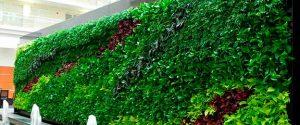 Muros-Verdes-en-Puebla