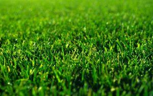 Pasto-Sintetico-en-Mexico-Sports-Grass
